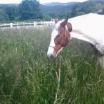 Skippy im hohen Gras