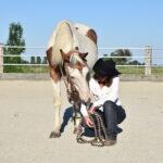 Komm her sagt mein Pferd